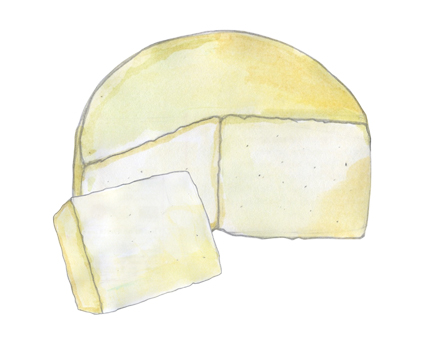 Kasseri P.D.O. Cheese illustration