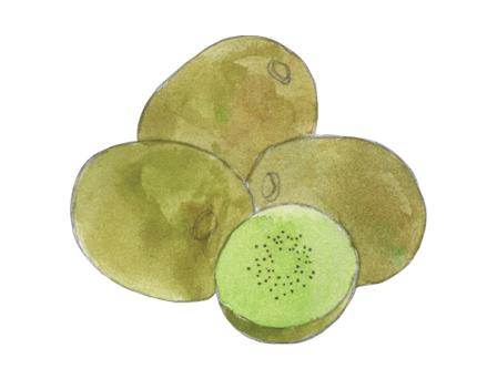 Kiwis illustration