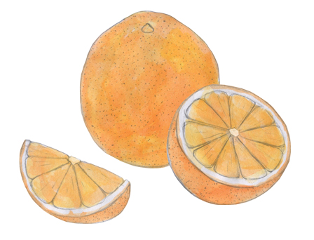 Oranges illustration