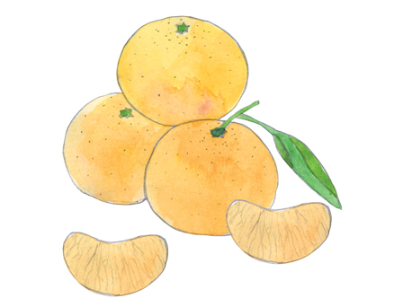 Clementines illustration