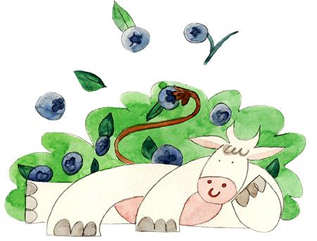 Drinkable Yogurt Bluberries illustration